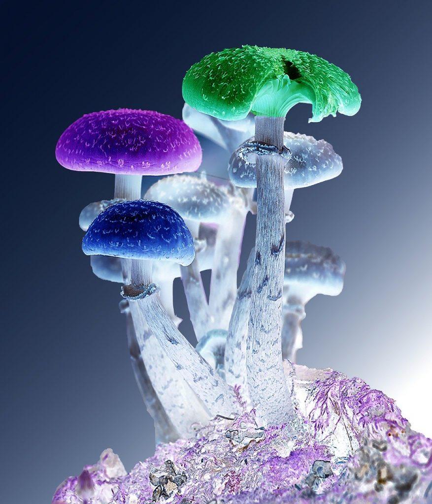 mikrodawkowanie grzybów i LSD